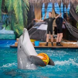 Дельфинарии, океанариумы Пушкина