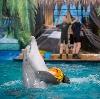 Дельфинарии, океанариумы в Пушкине