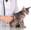 Ветеринарные клиники в Пушкине